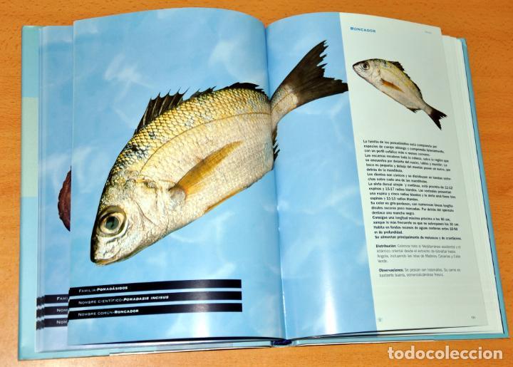 Libros de segunda mano: DETALLE 3. - Foto 4 - 62625356