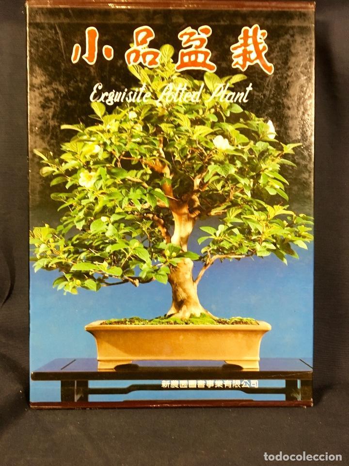 EXQUISITE POTTED PLANT PLANTAS MACETA BONSAI BONSAIS JAPON JAPONÉS 31,5X22CMS3,5X24,5CMS (Libros de Segunda Mano - Ciencias, Manuales y Oficios - Biología y Botánica)