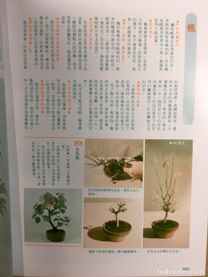 exquisite potted plant plantas maceta bonsai bo - comprar libros