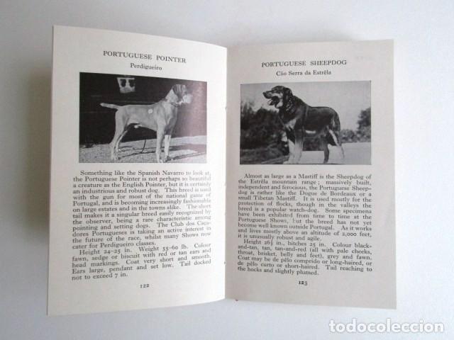 Libros de segunda mano: LIBRITO INGLÉS SOBRE LOS PERROS, 148 ILUSTRACIONES Y 300 RAZAS Y VARIEDADES, AÑO 1945 - Foto 11 - 68230897