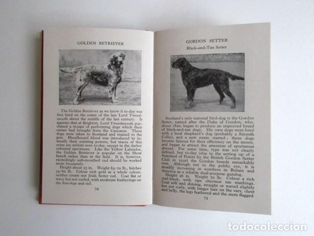 Libros de segunda mano: LIBRITO INGLÉS SOBRE LOS PERROS, 148 ILUSTRACIONES Y 300 RAZAS Y VARIEDADES, AÑO 1945 - Foto 12 - 68230897