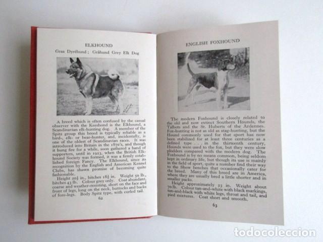Libros de segunda mano: LIBRITO INGLÉS SOBRE LOS PERROS, 148 ILUSTRACIONES Y 300 RAZAS Y VARIEDADES, AÑO 1945 - Foto 13 - 68230897