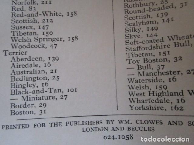Libros de segunda mano: LIBRITO INGLÉS SOBRE LOS PERROS, 148 ILUSTRACIONES Y 300 RAZAS Y VARIEDADES, AÑO 1945 - Foto 15 - 68230897