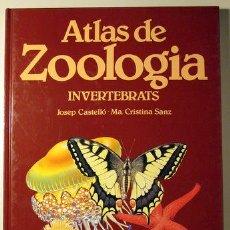 Libros de segunda mano: CASTELLÓ, JOSEP - SANZ, Mª CRISTINA - ATLAS DE ZOOLOGIA. INVERTEBRATS - BARCELONA 1988. Lote 69932763