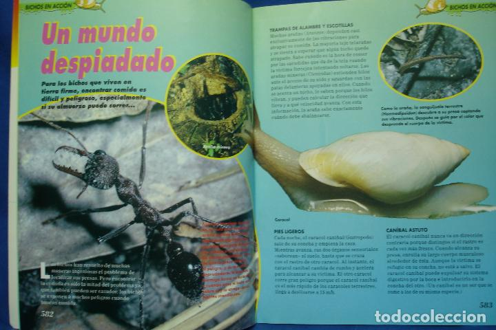 Libros de segunda mano: FASCICULO BICHOS Nº 25 - PLANETA DeAGOSTINI 1994 - Foto 3 - 70042433