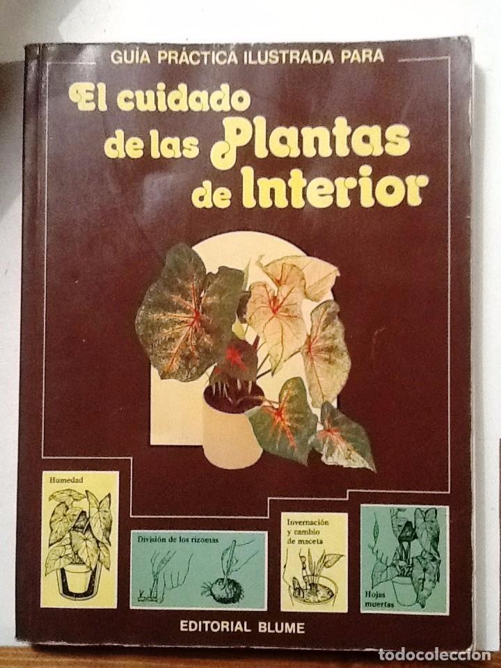 EL CUIDADO DE LAS PLANTAS DE INTERIOR GUIA PRACTICA ILUSTRADA (Libros de Segunda Mano - Ciencias, Manuales y Oficios - Biología y Botánica)