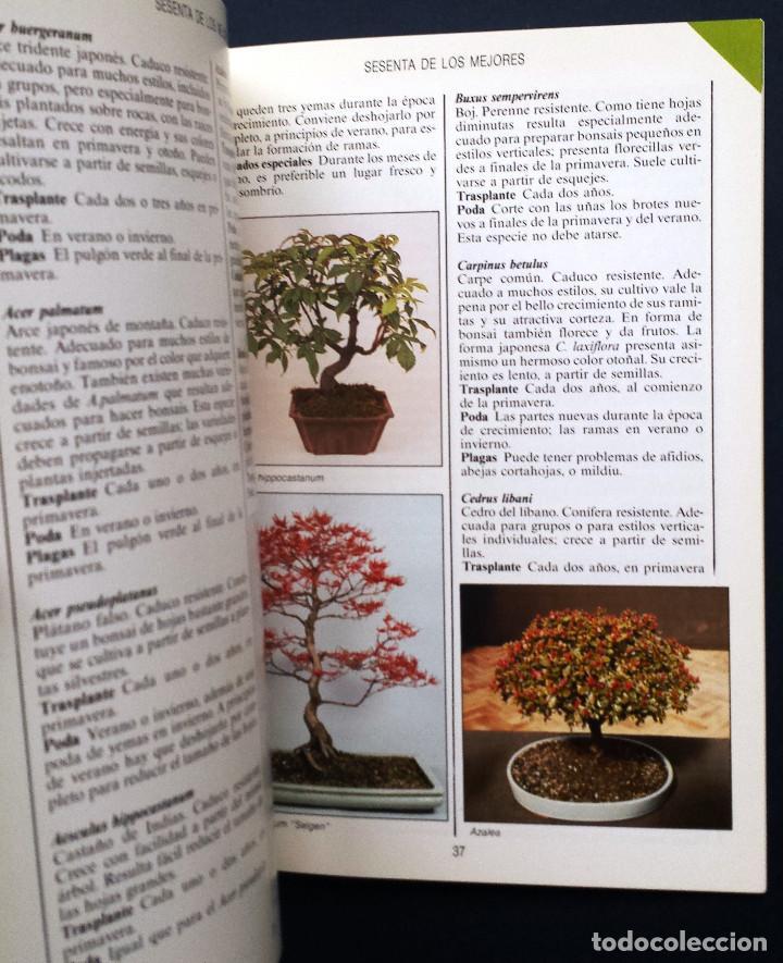 Libros de segunda mano: Guía Jardin BONSAI - Anne Swinton Editorial Blume SA - Foto 4 - 77364229