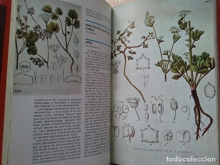 Libros de segunda mano: DICCIONARIO DE LAS PLANTAS MEDICINALES, EDITORS - Foto 3 - 78405605