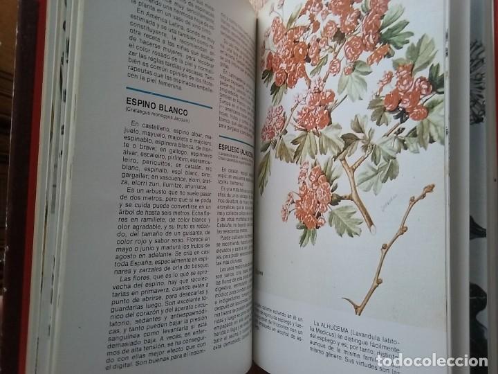 Libros de segunda mano: DICCIONARIO DE LAS PLANTAS MEDICINALES, EDITORS - Foto 4 - 78405605