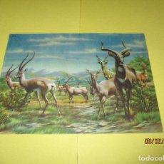 Libros de segunda mano: ANIMALES EN LA NATURALEZA DE EDICIONES KOALA CON 2 LAMINAS DIBUJADAS A PLUMA Y 10 LAMINAS A COLORES. Lote 79822481