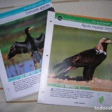 Libros de segunda mano: FICHAS AVES DE LA PENÍNSULA IBÉRICA. Lote 79881581