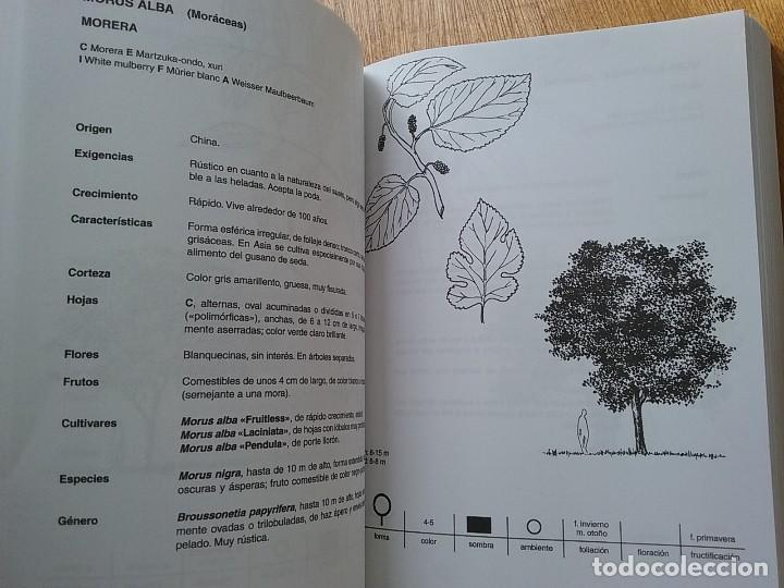 Deodendron arboles y arbustos de jardin en cli comprar for Arboles y arbustos de jardin