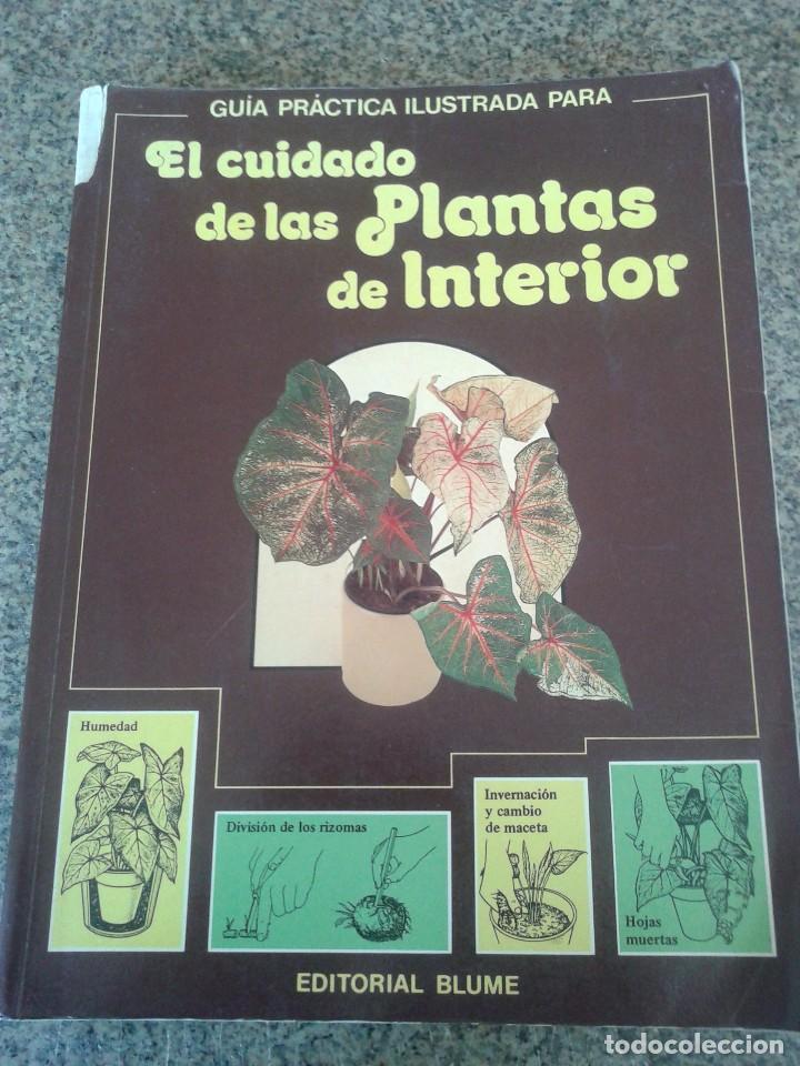 EL CUIDADO DE LAS PLANTAS DE INTERIOR -- GUIA PRACTICA -- EDITORIAL BLUME - 1982 -- (Libros de Segunda Mano - Ciencias, Manuales y Oficios - Biología y Botánica)
