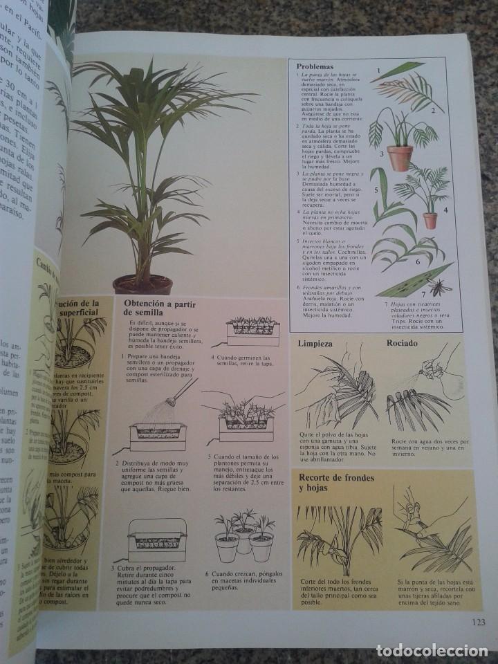 Libros de segunda mano: EL CUIDADO DE LAS PLANTAS DE INTERIOR -- GUIA PRACTICA -- EDITORIAL BLUME - 1982 -- - Foto 2 - 83411324