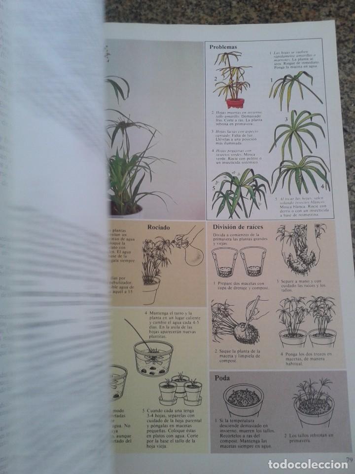 Libros de segunda mano: EL CUIDADO DE LAS PLANTAS DE INTERIOR -- GUIA PRACTICA -- EDITORIAL BLUME - 1982 -- - Foto 3 - 83411324