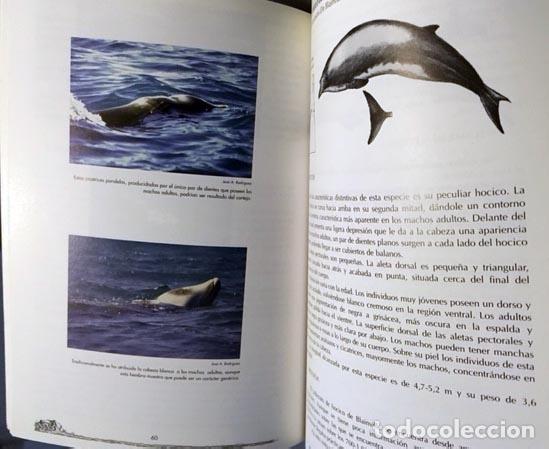 mamíferos marinos y tortugas del mar de alborán - Comprar Libros de ...