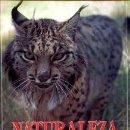 Libros de segunda mano: GONZALEZ GRANDE, JOSÉ LUIS: NATURALEZA SALVAJE IBERICA. Lote 90211116