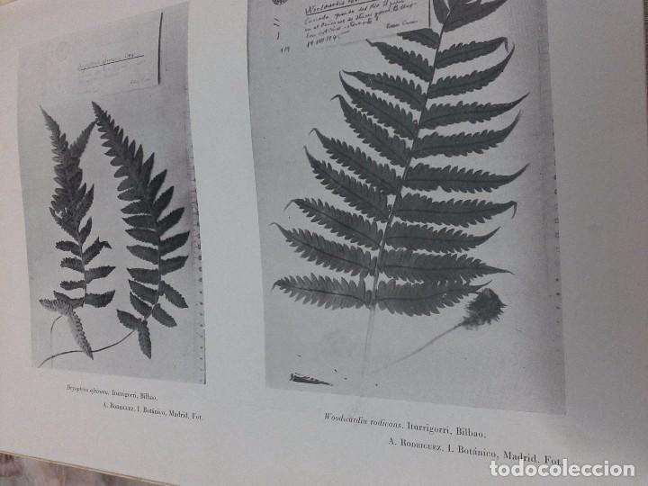 Libros de segunda mano: Vizcaya su paisaje vegetal .1949 - Foto 10 - 90902345