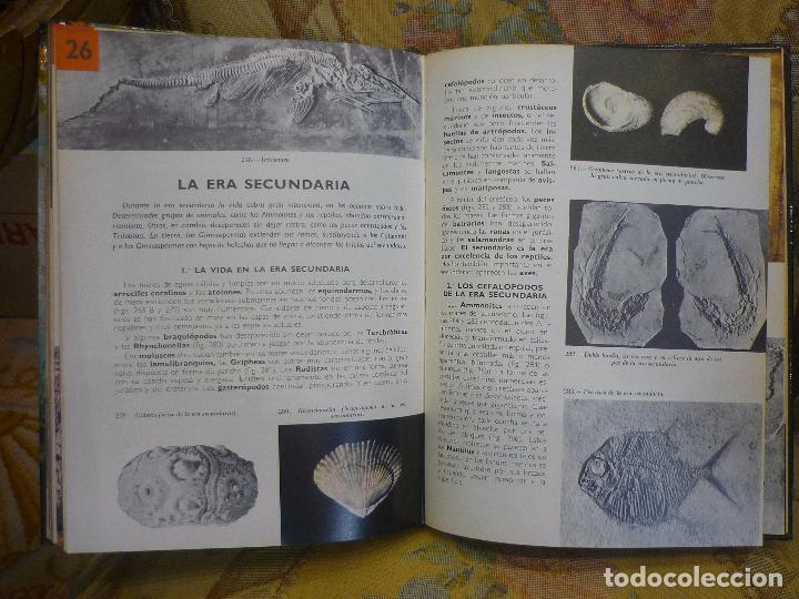 Libros de segunda mano: GEOLOGÍA, DE AIMÉ RUDEL. MONTANER Y SIMÓN, 1ª EDICIÓN 1.966. MUY ILUSTRADO. - Foto 9 - 91302465