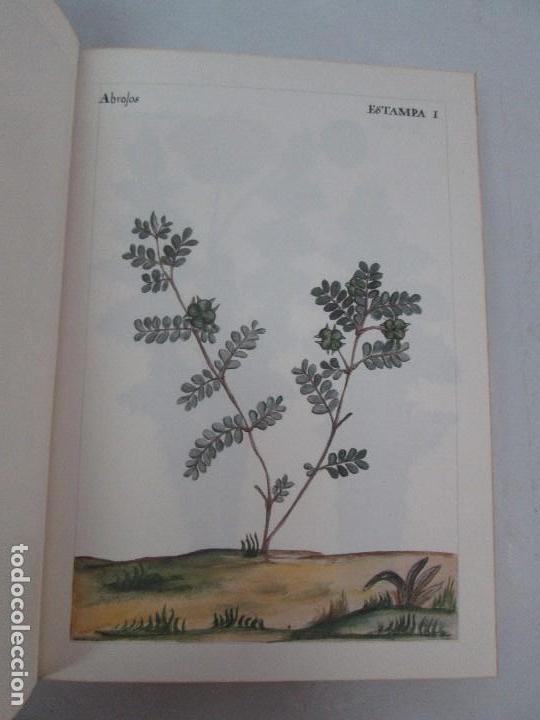 Libros de segunda mano: MARTINEZ COMPAÑON TRUJILLO DEL PERU. TOMO IV Y V. LAMINAS DE PLANTAS. EDICION ESPECIAL PARA MERCASA - Foto 10 - 93346125