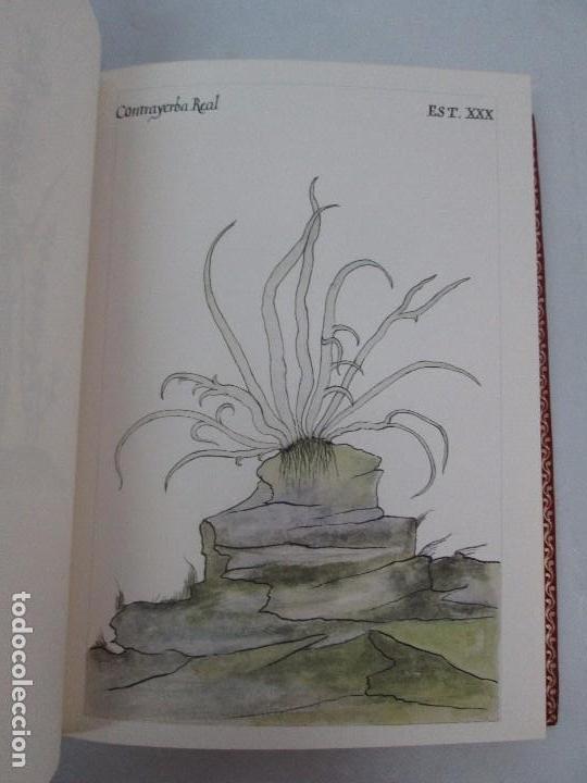 Libros de segunda mano: MARTINEZ COMPAÑON TRUJILLO DEL PERU. TOMO IV Y V. LAMINAS DE PLANTAS. EDICION ESPECIAL PARA MERCASA - Foto 12 - 93346125