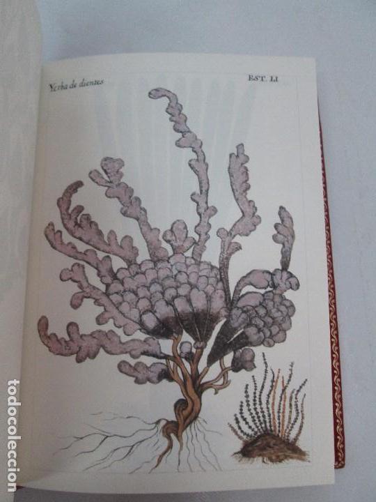 Libros de segunda mano: MARTINEZ COMPAÑON TRUJILLO DEL PERU. TOMO IV Y V. LAMINAS DE PLANTAS. EDICION ESPECIAL PARA MERCASA - Foto 14 - 93346125