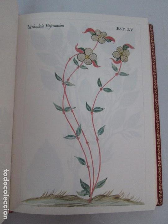 Libros de segunda mano: MARTINEZ COMPAÑON TRUJILLO DEL PERU. TOMO IV Y V. LAMINAS DE PLANTAS. EDICION ESPECIAL PARA MERCASA - Foto 15 - 93346125