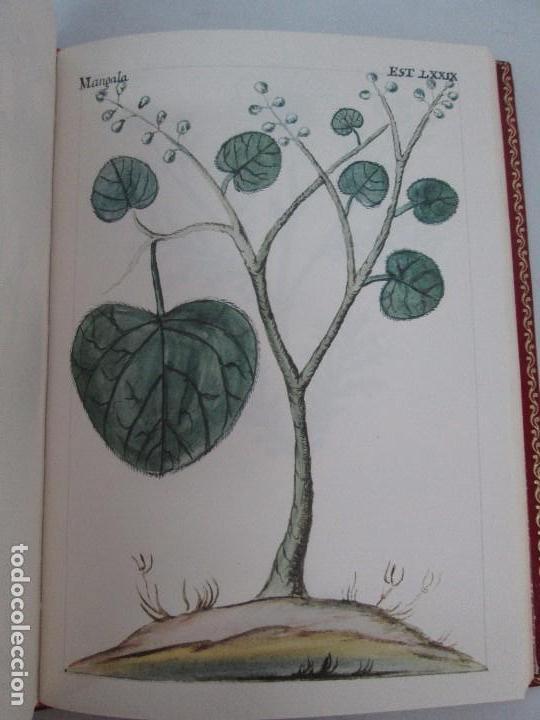 Libros de segunda mano: MARTINEZ COMPAÑON TRUJILLO DEL PERU. TOMO IV Y V. LAMINAS DE PLANTAS. EDICION ESPECIAL PARA MERCASA - Foto 16 - 93346125