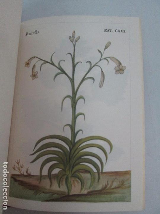 Libros de segunda mano: MARTINEZ COMPAÑON TRUJILLO DEL PERU. TOMO IV Y V. LAMINAS DE PLANTAS. EDICION ESPECIAL PARA MERCASA - Foto 18 - 93346125
