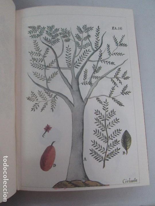 Libros de segunda mano: MARTINEZ COMPAÑON TRUJILLO DEL PERU. TOMO IV Y V. LAMINAS DE PLANTAS. EDICION ESPECIAL PARA MERCASA - Foto 32 - 93346125