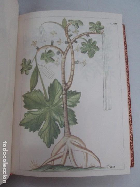 Libros de segunda mano: MARTINEZ COMPAÑON TRUJILLO DEL PERU. TOMO IV Y V. LAMINAS DE PLANTAS. EDICION ESPECIAL PARA MERCASA - Foto 36 - 93346125