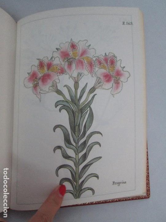 Libros de segunda mano: MARTINEZ COMPAÑON TRUJILLO DEL PERU. TOMO IV Y V. LAMINAS DE PLANTAS. EDICION ESPECIAL PARA MERCASA - Foto 38 - 93346125