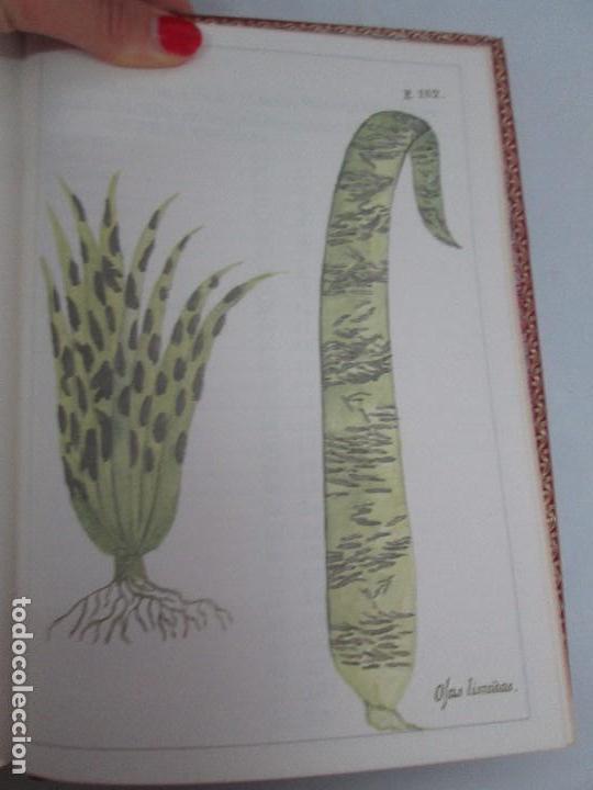 Libros de segunda mano: MARTINEZ COMPAÑON TRUJILLO DEL PERU. TOMO IV Y V. LAMINAS DE PLANTAS. EDICION ESPECIAL PARA MERCASA - Foto 40 - 93346125