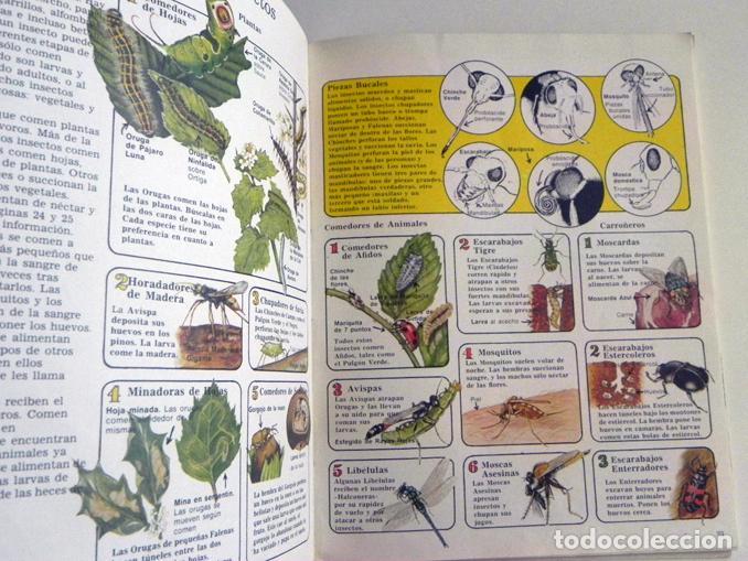 Libros de segunda mano: LA SENDA DE LA NATURALEZA - INSECTOS - LIBRO PLESA SM EDICIONES - GUÍA BIOLOGÍA CIENCIAS ESCARABAJOS - Foto 3 - 97165967