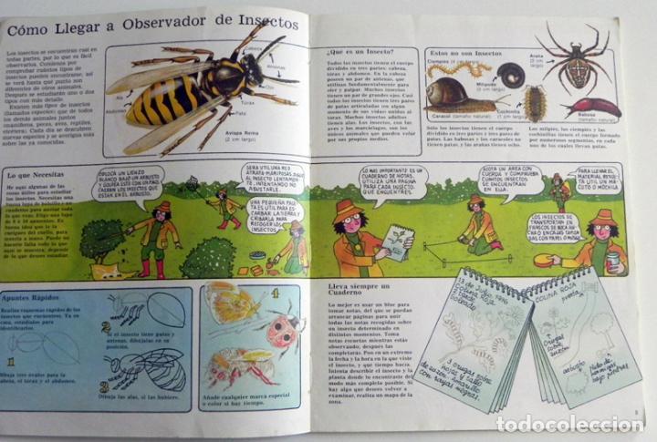 Libros de segunda mano: LA SENDA DE LA NATURALEZA - INSECTOS - LIBRO PLESA SM EDICIONES - GUÍA BIOLOGÍA CIENCIAS ESCARABAJOS - Foto 4 - 97165967