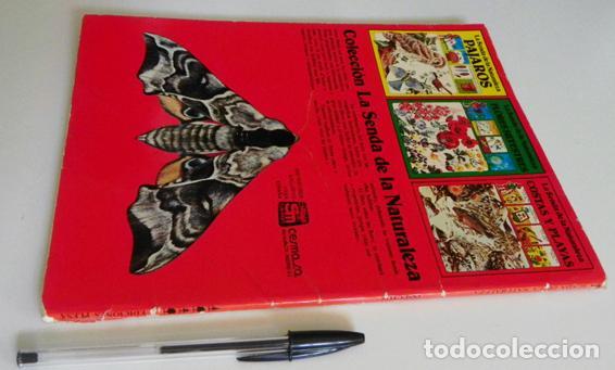 Libros de segunda mano: LA SENDA DE LA NATURALEZA - INSECTOS - LIBRO PLESA SM EDICIONES - GUÍA BIOLOGÍA CIENCIAS ESCARABAJOS - Foto 6 - 97165967