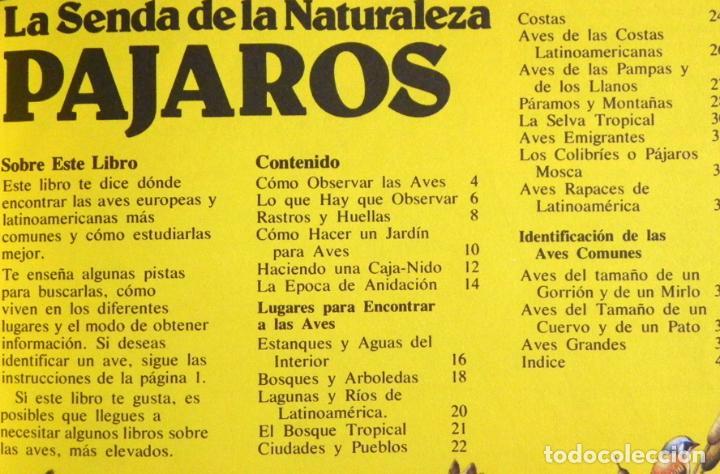 Libros de segunda mano: PÁJAROS - LA SENDA DE LA NATURALEZA - ED PLESA SM EDICIONES - LIBRO GUÍA AVES - BIOLOGÍA - MUY ILUST - Foto 2 - 97461195