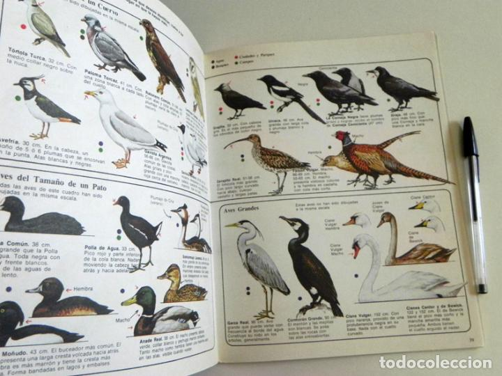 Libros de segunda mano: PÁJAROS - LA SENDA DE LA NATURALEZA - ED PLESA SM EDICIONES - LIBRO GUÍA AVES - BIOLOGÍA - MUY ILUST - Foto 3 - 97461195