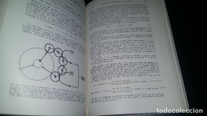 Libros de segunda mano: biologia general / I y II / alvarado - Foto 7 - 97774995