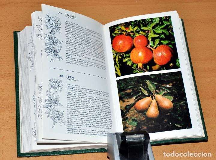 Libros de segunda mano: DETALLE 2. - Foto 3 - 250263875