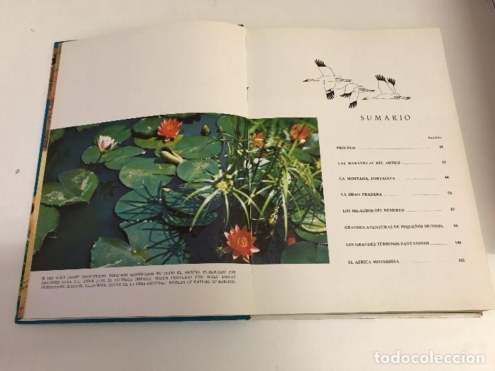 Libros de segunda mano: DOS TOMOS: MARAVILLAS DE LA NATURALEZA Y DE LA SELVA. WALT DISNEY. EDICIONES GAISA, 1967, 1968. B.E. - Foto 4 - 102490203