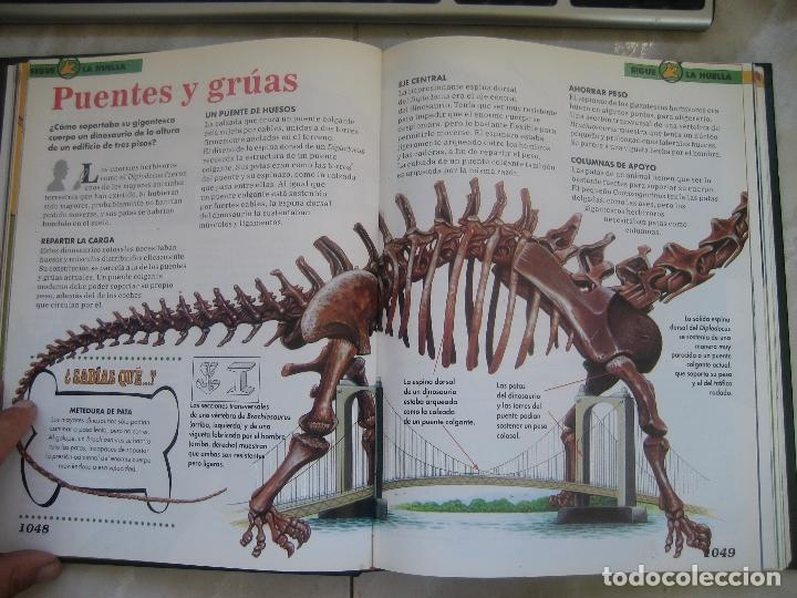 Libros de segunda mano: Dinosaurios Planeta Agostini 5 tomos - PALEONTOLOGÍA - BIOLOGÍA - envío 14,90 + 1 euros CORREOS 72h - Foto 14 - 102600656