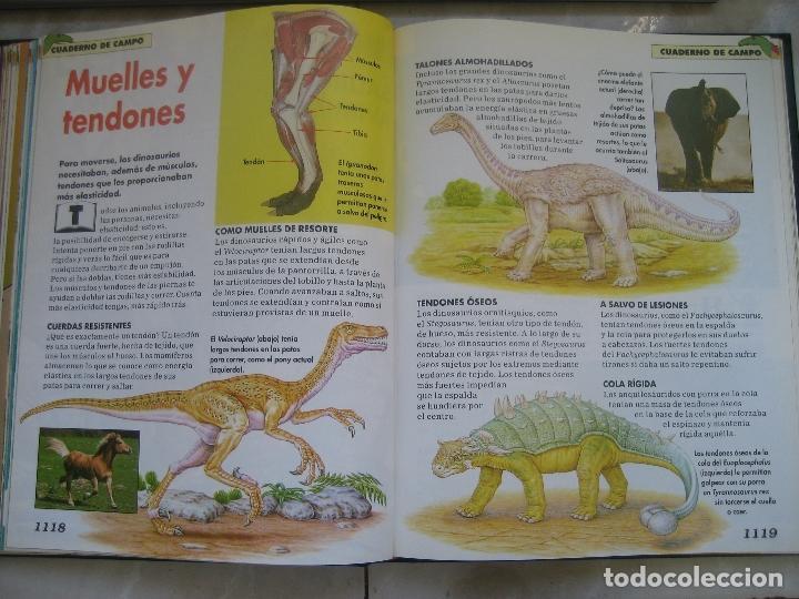 Libros de segunda mano: Dinosaurios Planeta Agostini 5 tomos - PALEONTOLOGÍA - BIOLOGÍA - envío 14,90 + 1 euros CORREOS 72h - Foto 16 - 102600656