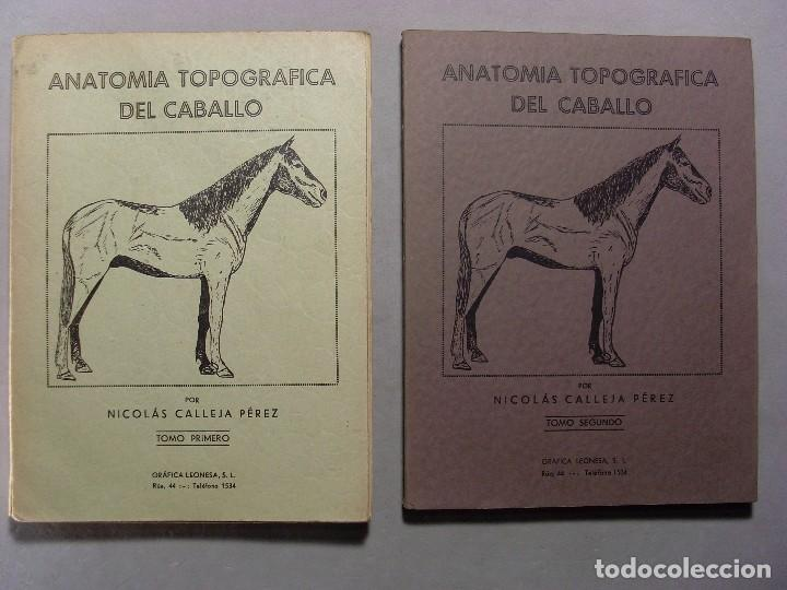 anatomía topográfica del caballo / dos tomos / - Comprar Libros de ...