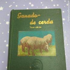 Libros de segunda mano: GANADO DE CERDA. Lote 107307550