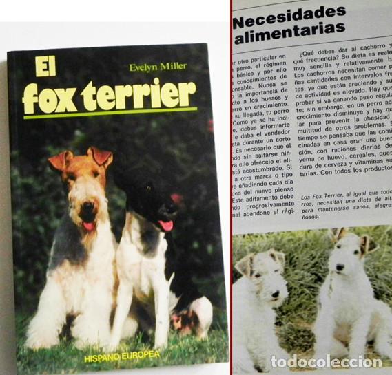 EL FOX TERRIER - LIBRO EVELYN MILLER GUÍA DE CUIDAR PERRO - HISTORIA - PERROS FOTOS MASCOTA CUIDADOS (Libros de Segunda Mano - Ciencias, Manuales y Oficios - Biología y Botánica)