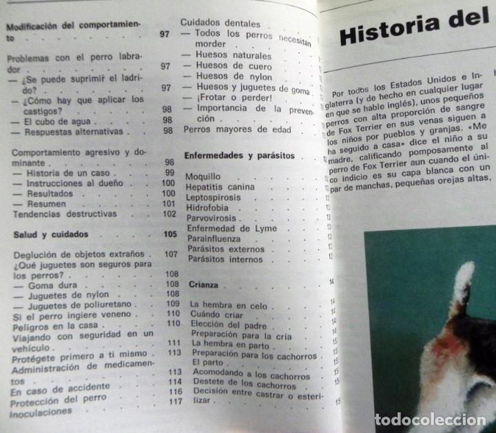 Libros de segunda mano: EL FOX TERRIER - LIBRO EVELYN MILLER GUÍA DE CUIDAR PERRO - HISTORIA - PERROS FOTOS MASCOTA CUIDADOS - Foto 3 - 107433695