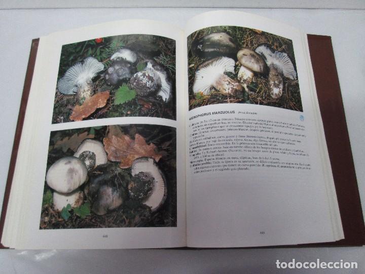 Libros de segunda mano: LAS SETAS EN LA NATURALEZA. TOMO I Y II. RAMON MANDAZA DE ACUÑA. IBERDROLA 1994 Y 1996. VER FOTOS - Foto 14 - 107593479