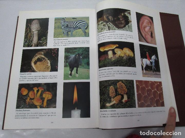 Libros de segunda mano: LAS SETAS EN LA NATURALEZA. TOMO I Y II. RAMON MANDAZA DE ACUÑA. IBERDROLA 1994 Y 1996. VER FOTOS - Foto 15 - 107593479