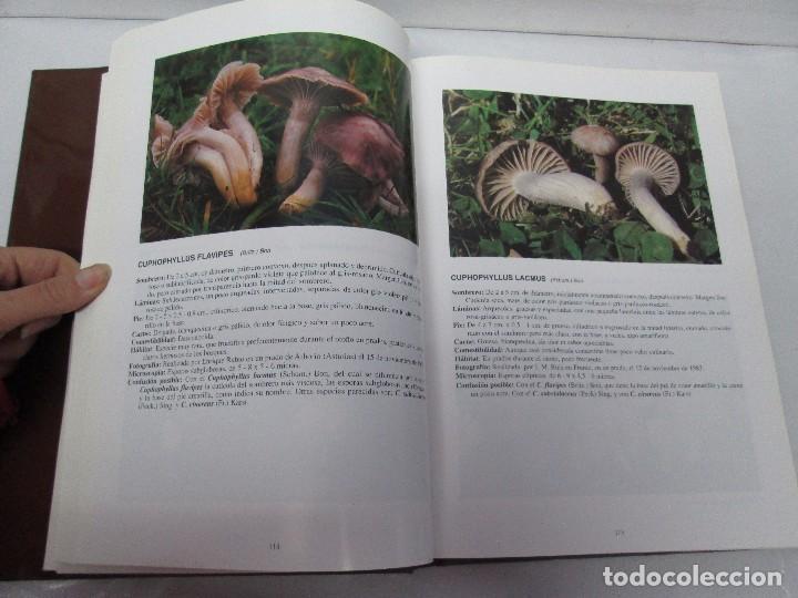 Libros de segunda mano: LAS SETAS EN LA NATURALEZA. TOMO I Y II. RAMON MANDAZA DE ACUÑA. IBERDROLA 1994 Y 1996. VER FOTOS - Foto 23 - 107593479
